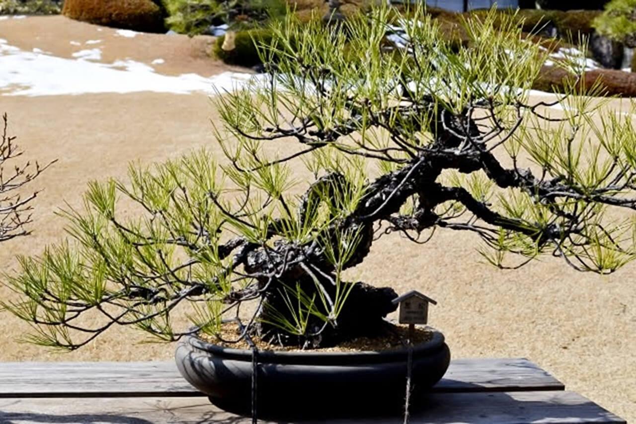 遺品整理ででた盆栽や植木鉢を処分する方法